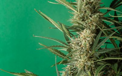 Top 5 Medical Cannabis Products Available in Australia